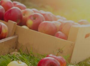 cajas manzanas rojas