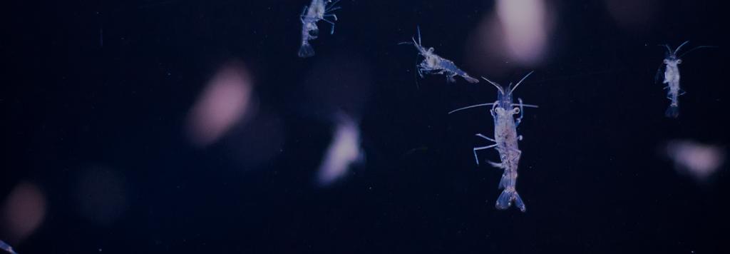 Plancton usos